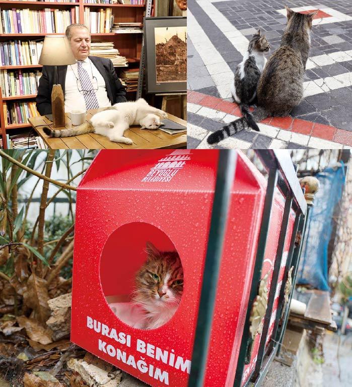 イスタンブール街猫写真展